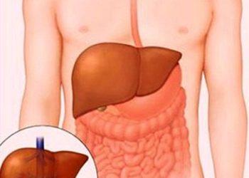 Sơ gan và viêm gan B, C