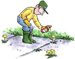 Tác hại của thuốc bảo vệ thực vật