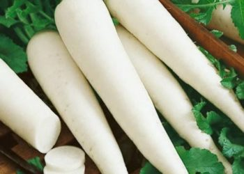 Ca la thầu - củ cải trắng