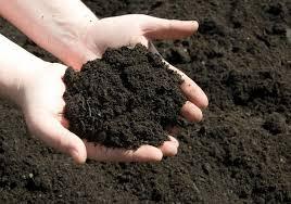 Đất sạch trồng rau